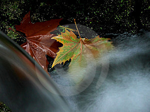 Autumn I. Royalty Free Stock Image - Image: 1596306
