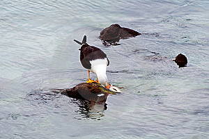 Seagull Eating A Fish Royalty Free Stock Image - Image: 15908006