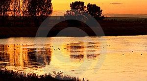 Ducks On Calm Lake At Sunset Stock Image - Image: 15909381