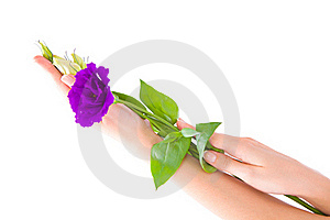 Hand And Flower Royalty Free Stock Photography - Image: 15912887