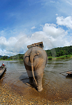 Behind The Elephant Royalty Free Stock Image - Image: 15914646
