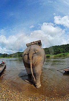 Behind The Elephant Royalty Free Stock Image - Image: 15914646