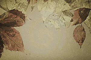 Autumnal Leaves On An Old Paper Royalty Free Stock Photography - Image: 15919137