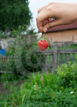 Strawberry Stock Image - Image: 15929541