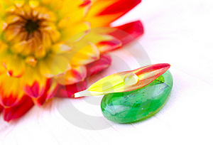 Petal With Drop Of Water Royalty Free Stock Photo - Image: 15932555