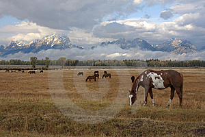 Horse And Tetons Stock Photo - Image: 15934930
