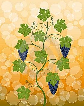 Vine Royalty Free Stock Photo - Image: 15944205