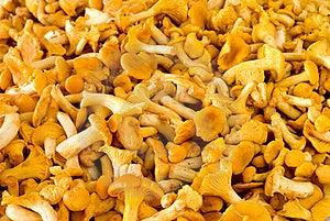 Chanterelle Mushroom Stock Image - Image: 15944861