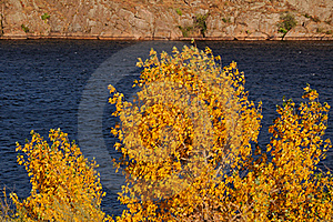 Yellow Tree Stock Images - Image: 15945034