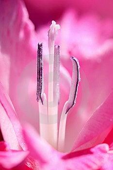 Flower Stamens Royalty Free Stock Photos - Image: 15947838