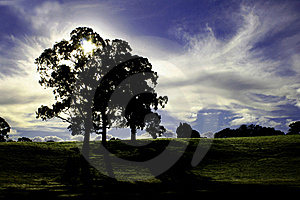 Tree Silhouette Royalty Free Stock Photo - Image: 15956335