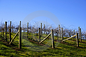 Vineyard Landscape Royalty Free Stock Images - Image: 15956389
