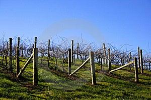 Vineyard Landscape Royalty Free Stock Images - Image: 15956389