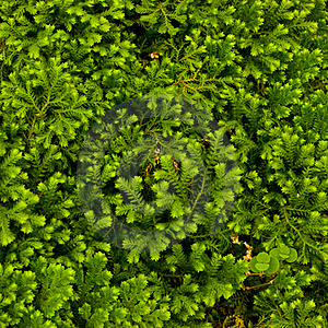 Green Moss Royalty Free Stock Photography - Image: 15961387