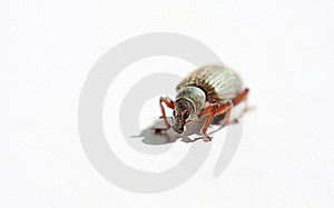 Hairy Bug Stock Photos - Image: 15961593
