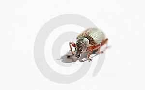 Hairy Bug Stock Photos - Image: 15961593