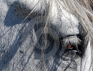 Horse Eye Stock Photography - Image: 15968652