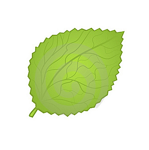 Green Leave Card. Stock Photo - Image: 15969190