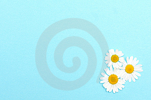 Blue Textured Paper With Daisies Royalty Free Stock Images - Image: 15969279