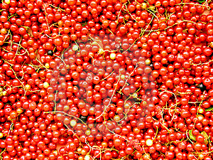 Currants 2 Free Stock Images