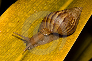 Snail Free Stock Photos