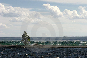 lonesome tree Royalty Free Stock Photo