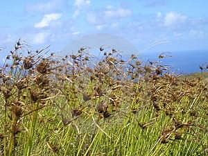 Ilha de Páscoa - vulcão de Rano Kau Fotografia de Stock