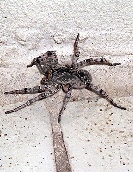 Spider 1 Free Stock Image