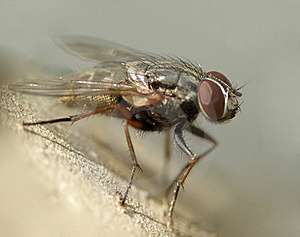 Fly......(8) Free Stock Photography