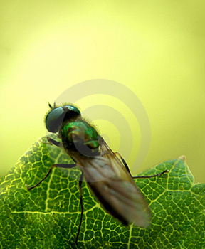 Fly......(9) Free Stock Photos