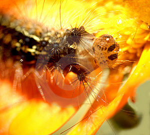 Caterpillar...(3) Stock Image
