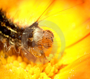 Caterpillar...(5) Stock Photos