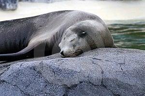 Seal 4 Free Stock Photos