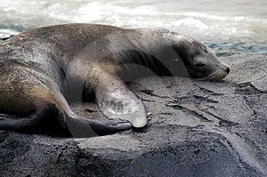 Seal 2 Stock Photo