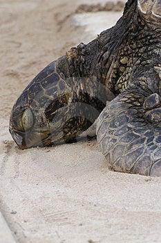 Черепаха 4 Стоковые Изображения