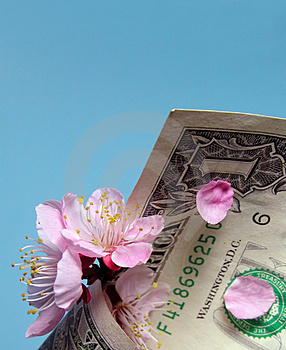 Cherry Flowers And Dollar Bill Stock Photos