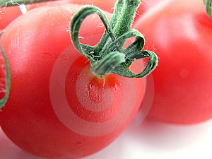 Tomatoes Free Stock Photo