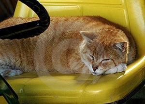 Adormecido na roda Imagens de Stock Royalty Free