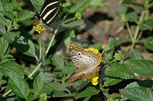 Paare Schmetterlinge Stockfotos