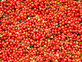 Currants 2 Royalty Free Stock Images