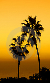 Palms Stock Image - Image: 1603101