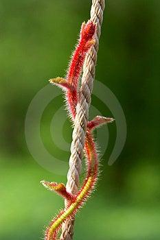 Roter Stiel Stockfoto - Bild: 1605220