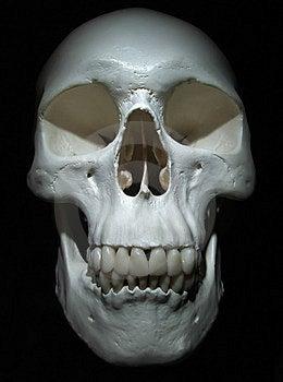 Crânio Imagem de Stock - Imagem: 1607661