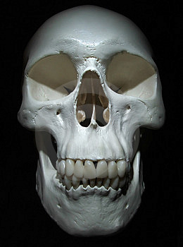 Crâne Image stock - Image: 1607661