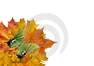 Wreath From Maple Slip Royalty Free Stock Photography - Image: 16000547