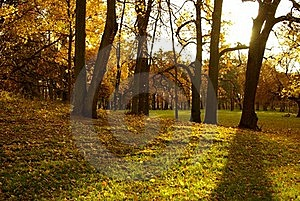Autumn In The Park Stock Photo - Image: 16002390