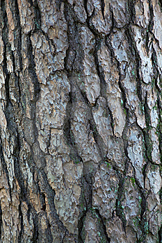 Tree bark pattern Royalty Free Stock Photos