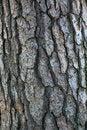 Tree bark pattern Royalty Free Stock Photos
