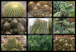 Cactus Collage Royalty Free Stock Photos - Image: 16012818