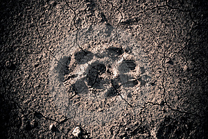 Animal Footprint Stock Photos - Image: 16013273